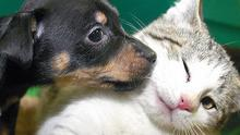 Cats and dogs - depending on breed - can be very expensive to buy