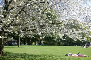 Press Eye - Belfast - Northern Ireland - 8th May 2016  People take advatage of the good weather in Botanic Gardens in south Belfast.  Northern Ireland is set this week for the highest temperatures this year.   Picture by Jonathan Porter/PressEye