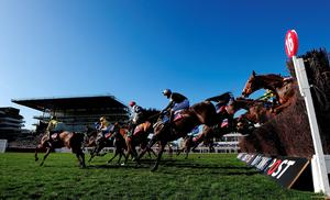 CHELTENHAM, ENGLAND - MARCH 10:  The field take a flight in the home straight during The Ultima Business Solutions Handicap Steeple Chase during Day One of the Cheltenham Festival at Cheltenham Racecourse on March 10, 2015 in Cheltenham, England.  (Photo by Dan Mullan/Getty Images)