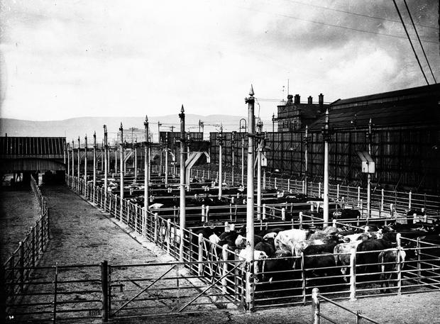 Cattle pens at The Great Northern Railway Station, Belfast, from the Albert Bridge.  2/9/1943 BELFAST TELEGRAPH COLLECTION/NMNI