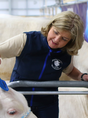 Maggie McQuiston tends to her calves at Balmoral Show
