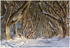 The Dark Hedges, Co. Antrim – Courtesy of Tourism NI