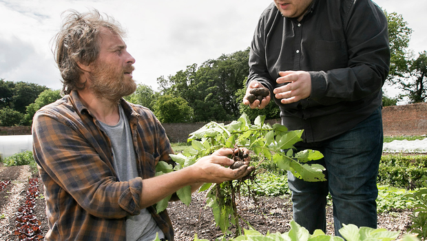 David and Tim check out the walled garden's blue potatoes (right)