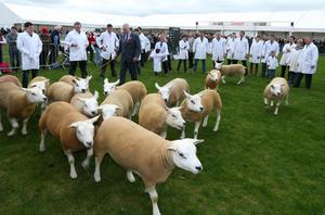 @Press Eye Ltd Northern Ireland- 14th   May   2014 Mandatory Credit -Brian Little/Presseye  John McKerow from Scotland judging the Texel sheep  at the Balmoral Show at the Maze/Longkesh  Picture by  Brian Little/Presseye
