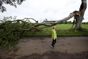One of the renowned trees which features in Game of Thrones has fallen on to the road near Armoy, County Antrim. The tunnel of trees, known as the Dark Hedges, became famous throughout the world after it featured as the Kingsroad in the HBO series. Press Eye - Belfast: Photo by Brian Little