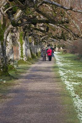 Visitors enjoying the snowdrop walk at the Argory. Credit: Bernie Brown