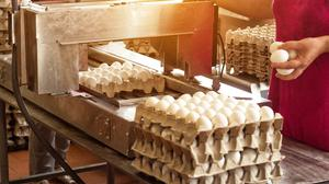 The production of egg cartons is one area which could be affected
