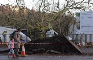 GLASGOW, SCOTLAND - DECEMBER 5: Passersby pass fallen trees and storm damage on Kelvin Way on December 5, 2013 in Glasgow, Scotland. Parts of the UK have suffered winds of up to 142mph today, causing travel disruptions, loss of power and one death in West Lothian, Scotland. (Photo by Mark Runnacles/Getty Images)