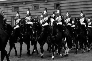 The Household Cavalry horse Sefton, the Blues and Royals horse injured in the Hyde Park bombing (second right, white blaze), returning with the cavalry escort for the Queen's procession after the State opening of Parliament.