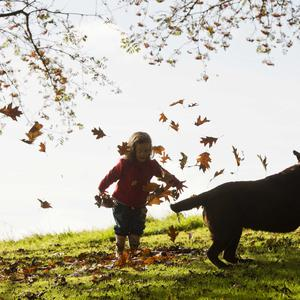 Mark Marlow 19/10/16 With Autumn well underway the trees and wildlife begin to go to sleep for the winter. All the colours of the rainbow can be seen on a beautiful autumn day bringing families and their pets out for walks in our local green areas. Pictured is Cliodhna Murray enjoying playing in the autumn sun with her dog Tiki. Pictures Mark Marlow