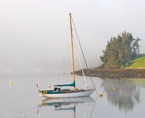 'These photographs were taken during my morning walk on Gibb's Island, Killyleagh, Co Down. It really is a beautiful place' - Pic Laura Skinner