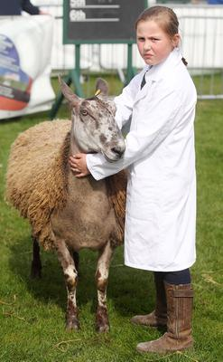 Northern Ireland- 15th May 2014 Mandatory Credit - Photo-Jonathan Porter/Presseye.  Ulster Bank Balmoral Show second day at the Maze site outside Lisburn.    The annual agricultural show attracts local retailers as was as farmers showing raw breeds, horse jumping and big retailers.  Kelly O'Kane from Carnlough with her Blue Leicester Ewe.