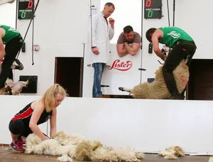 Press Eye - Belfast - Northern Ireland - 15th May 2019  First day of the Balmoral Show, in partnership with Ulster Bank.  The Sheep shearing competition takes place at Balmoral Park outside Lisburn.   Picture by Jonathan Porter/PressEye
