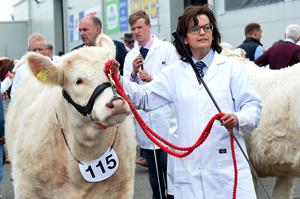 Pacemaker Press 15/5/19 Animals os show on The opening day of the Balmoral Show  on Wednesday, Tens of thousands of people are expected to attend Ireland's largest agricultural and food show, over the next four days. The show is taking place at the former Balmoral Park just outside Lisburn and features a mix of farming displays as well as family activities. Pic Colm Lenaghan/Pacemaker