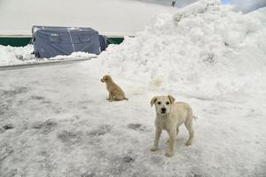Dogs stand in front of a large tent on a nearby sports ground in Montereale, after a 5.7-magnitude earthquake struck the region, on January 19, 2017. Several people have died after a ski hotel was buried by an avalanche in earthquake-hit central Italy, local media reported quoting rescue services. / AFP PHOTO / ANDREAS SOLAROANDREAS SOLARO/AFP/Getty Images