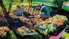 Sense of wellbeing: Gardeners scored high in the government's happiness survey