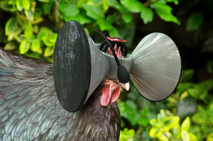 Second Livestock, a mini Oculus Rift headset and earphone combo that can be placed over the eyes and ears of battery farmed chickens to give them the impression they're living beautiful, free range lives.