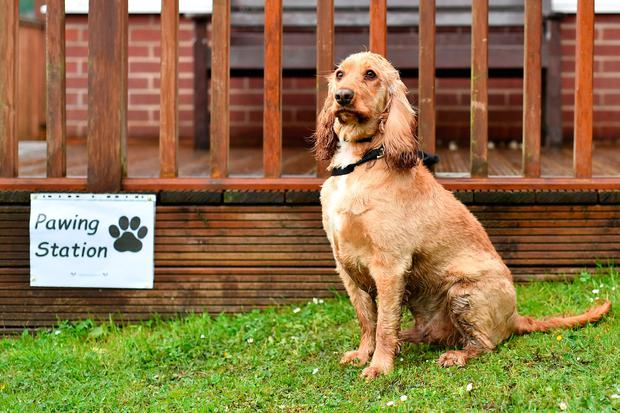 Dougie the Cocker Spaniel sits beside a sign reading 'Pawing Station' outside a polling station on June 8, 2017 in Stalybridge, Greater Manchester, United Kingdom. Voters are going to the polls today to vote in the General Election  (Photo by Anthony Devlin/Getty Images)