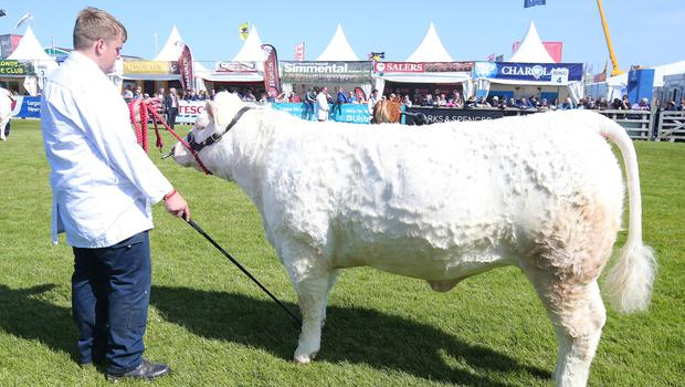 Second day of the 2018 Balmoral Show, in partnership with Ulster Bank, at Balmoral Park.  Cattle judging as the 150th anniversary Balmoral Show continues (Jonathan Porter/PressEye)