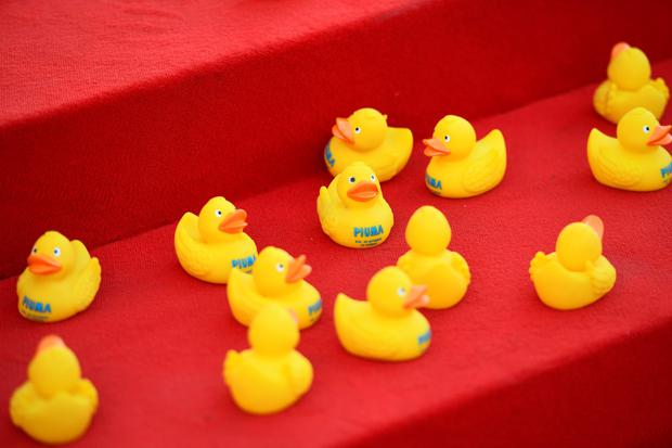 VENICE, ITALY - SEPTEMBER 05:  Rubber ducks on the red carpet of 'Piuma' premiere during the 73rd Venice Film Festival at Sala Grande on September 5, 2016 in Venice, Italy.  (Photo by Ian Gavan/Getty Images)