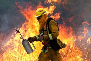 CLEARLAKE, CA - AUGUST 03:  A Cal Fire firefighter moves away from a tall flame as he uses a drip torch to burn dry grass during a backfire operation to head off the Rocky Fire on August 3, 2015 near Clearlake, California. Nearly 3,000 firefighters are battling the Rocky Fire that has burned over 60,000 acres has forced the evacuation of 12,000 residents in Lake County. The fire is currently 12 percent contained and has destroyed at least 14 homes. 6,300 homes are threatened by the fast moving  blaze.  (Photo by Justin Sullivan/Getty Images)