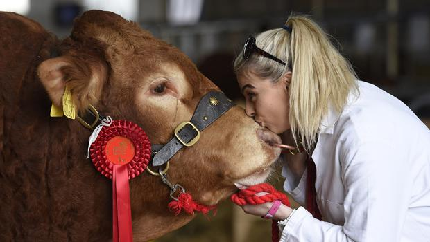 15/5/19: Julie Anne Clyde with her bull Nijinsky from Crawford Brothers, winner of the Senior Bull Class at the Balmoral Show. Picture: Michael Cooper