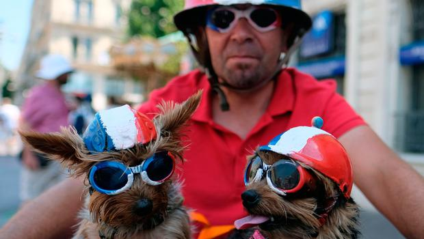Dogs bearing the colors of the French national flag are pictured prior to the start of the Russia 2018 World Cup final football match between France and Croatia, in Marseille, southern France on July 15, 2018.    / AFP PHOTO / BORIS HORVATBORIS HORVAT/AFP/Getty Images