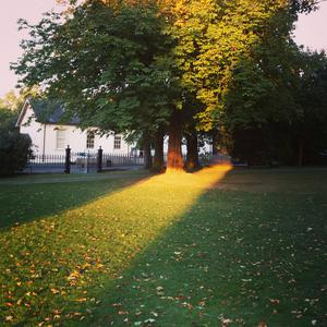 St Philips and St James church grounds in Holywood. Couldn't help but snap this brushstroke of evening sun. Taken October 2016 by Jen Dickson