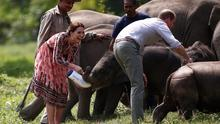 William and Kate share a laugh as they feed baby elephants