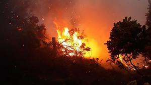 """The latest in an alarming number of incidents saw crews battle a """"significant"""" wildfire involving gorse and forestry in Co Down for 24 hours"""