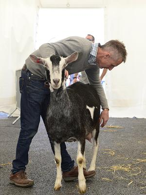 Pacemaker Press Belfast: 16/5/2018:   The Balmoral Show has begun with the first of four days of events to showcase food and farming in Northern Ireland. As well as a range of livestock classes, the event hosts hundreds of trade stands displaying everything from crafts to machinery. Maurice Murphy and Azaria the goat. Picture By: Arthur Allison. Pacemaker Press.