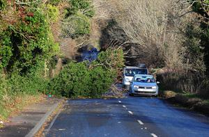Pacemaker Press Belfast 05-12-2013: Northern Ireland Electricity (NIE) has said 6,500 customers are without power after strong winds caused disruption to power supplies. High winds caused trees to fall on the Killyeagh Road blocking one lane outside Downpatrick . Picture By: Arthur Allison.