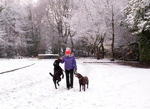 Pacemaker Press 08/12/2017 Walking the dogs    in Crumlin , as heavy snow falls across  Northern Ireland on Friday morning, leaving difficult driving conditions for motorists and some schools closed. Pic Colm Lenaghan/ Pacemaker