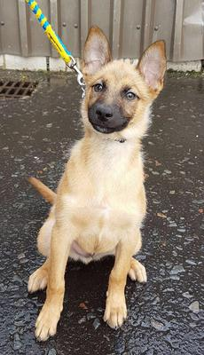 Benny the rescue pup will be entered into the Young Dog Scheme.