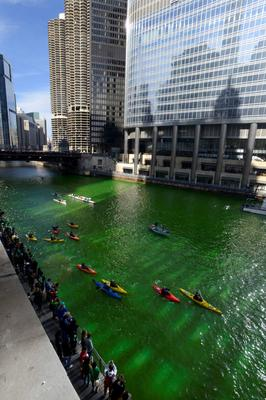 Kayakers float on the Chicago River after being dyed green ahead of the St. Patrick's Day parade in Chicago, Saturday, March 14, 2015. (AP Photo/Paul Beaty)