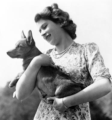 Princess Elizabeth (now Queen Elizabeth II) holding a Corgi, as the breed have been the Queen's life-long companions - small dogs described as having big personalities.  PA Wire
