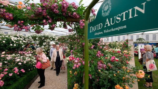 Visitors at the David Austin Roses display during the RHS Chelsea Flower Show at the Royal Hospital Chelsea, London. PRESS ASSOCIATION Photo. Issue date: Tuesday May 22, 2018. Photo credit should read: Jonathan Brady/PA Wire