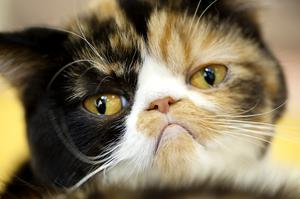 Although pet cats are more than capable of recognising their owner's voice, they choose to ignore them