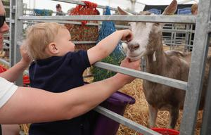 PressEye-Northern Ireland- 15th May  2019-Picture by Brian Little/PressEye  Sam Beattie aged 2 from Tullyveery, Killyleagh  at Balmoral Park during the first day of the Balmoral Show 2019 Picture by Brian Little/PressEye