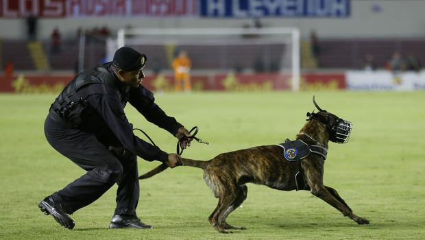 Press Eye - Belfast -  Northern Ireland - 29th May 2018 - Photo by William Cherry/Presseye  Panama police dog on the pitch during Wednesday nights International Friendly at the Estadio Rommel Fernandez, Panama City.