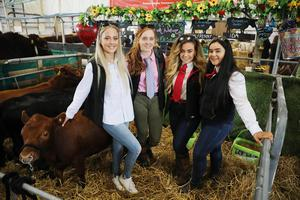 Naomi Alexander, Hannah Alexander, Zara Gabbry and Lucy Gabbey  with Dexter Cattle, Ballyboley Dexters from Graeyabbey Co Down showing  at Balmoral Park during the first day of the Balmoral Show 2019. Picture by Brian Little/PressEye