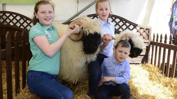 Pacemaker Press Belfast: 16/5/2018:   The Balmoral Show has begun with the first of four days of events to showcase food and farming in Northern Ireland. As well as a range of livestock classes, the event hosts hundreds of trade stands displaying everything from crafts to machinery. Sarah 12,Rachael 10 and Richard 6 pictured with there sheep. Picture By: Arthur Allison. Pacemaker Press.