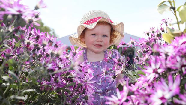 Erin Cunningham aged 2 from Armagh at Balmoral Park during the first day of the Balmoral Show 2019. Picture by Brian Little/PressEye