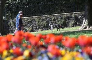 A dog walker enjoys the Spring sunshine in Wallace Park, Lisburn on Tuesday. The park was reopened after being closed because of the Coronavirus restrictions. Picture by Stephen Davison.
