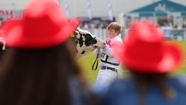 Press Eye - Belfast - Northern Ireland - 18th May 2018  Third day of the 2018 Balmoral Show, in partnership with Ulster Bank, at Balmoral Park.  Cattle showing and judging.   Picture by Jonathan Porter/PressEye