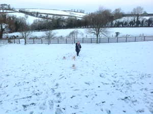 Loving the snow are my pups Murphy, Lexi and Dexter. Submitted by Kathy Mackin-Jackson, from Armagh. Jan 2017.