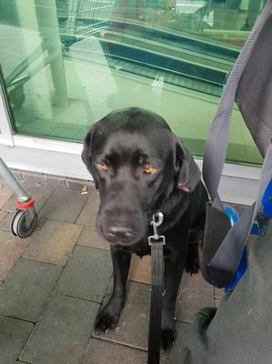 The dog was tied up outside a Northern Ireland Tesco store. Pic Tesco Springhill Community group
