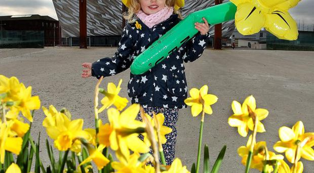 Evie Rose Miller, aged 3 helps Marie Curie Cancer Care to launch this year's Great Daffodil Appeal with the support of Titanic BelfastEvie Rose Miller, aged 3 helps Marie Curie Cancer Care to launch this year's Great Daffodil Appeal with the support of Titanic Belfast