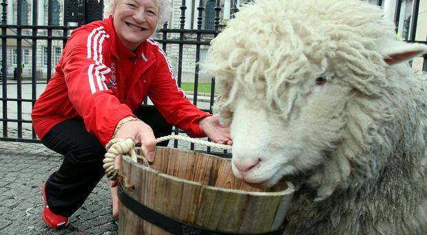 Traffic in Belfast came to a temporary standstill this morning as Dame Mary Peters herded sheep through the city centre accompanied by the Lord Mayor Gavin Robinson
