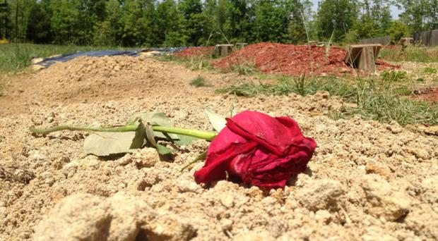 A flower is placed on the alleged burial site of Boston Marathon bombing suspect Tamerlan Tsarnaev